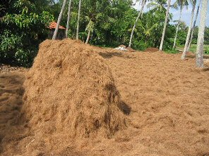 Coir drying naturally in the sunshine