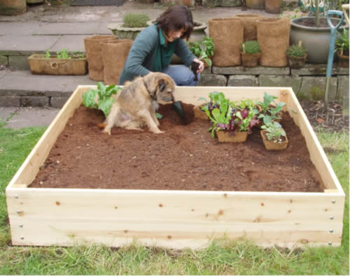 A Raised Bed and Ted