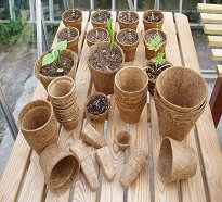 8cm Biodegradable Pots - Qty 50