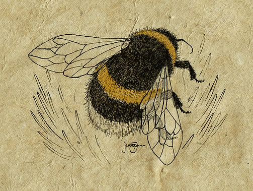Bumblebee on Clover Print