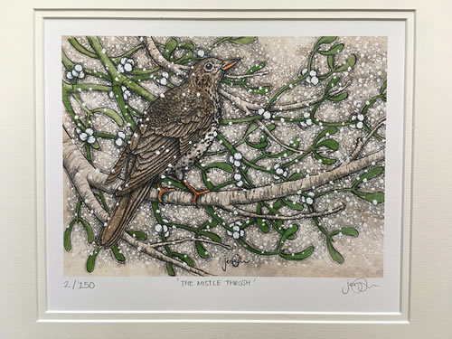 Mistle Thrush Limited Edition Print