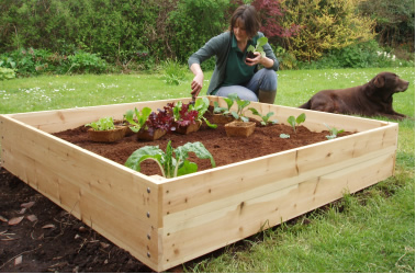 One Raised Bed