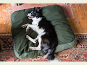 The 'Mattress' Pet Bed