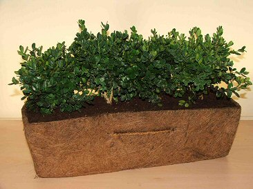 Biodegradable Trough